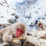 温泉旅行。|パパ山根のクリプトタートルズ
